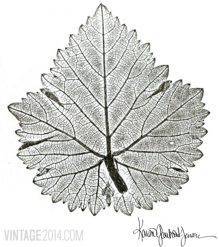 Grenache Blanc Leaf