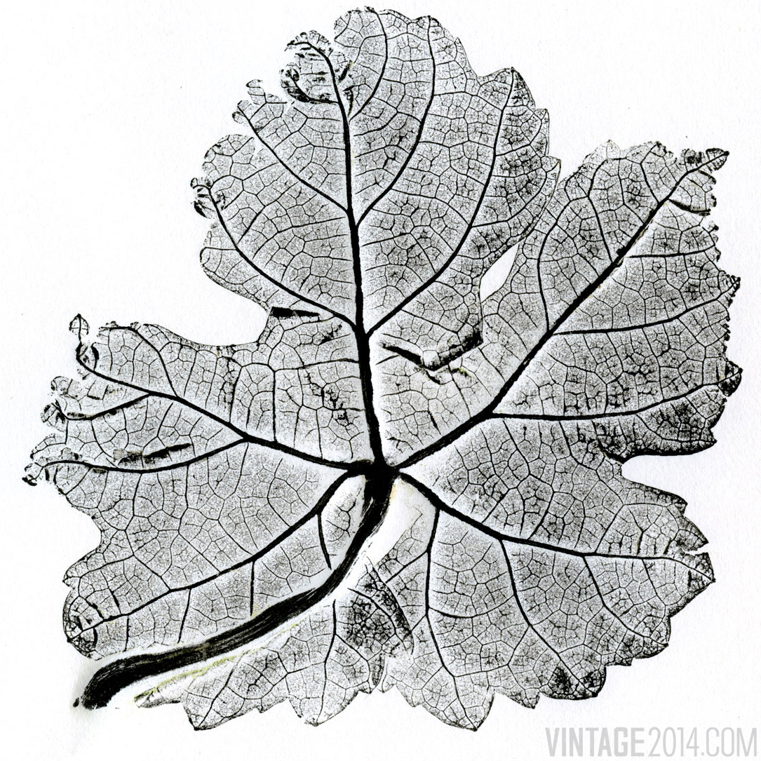 Roussanne Leaf Pressing
